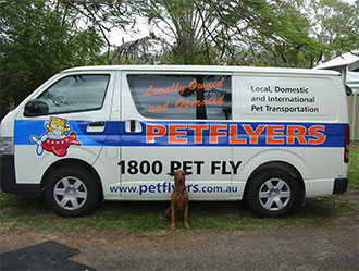 Petflyers Domestic And International Pet Transportation